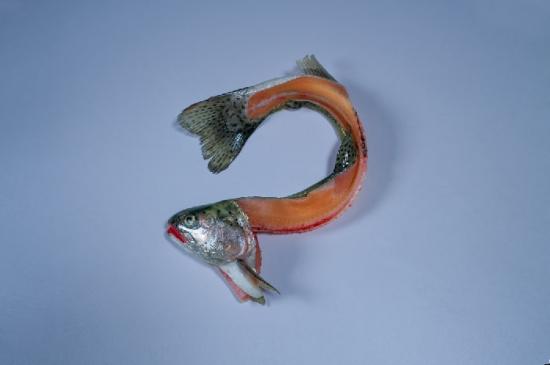 Warum schwimmen Fische nackt?