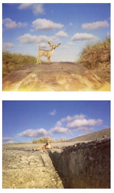 Polaroid Blow Ups