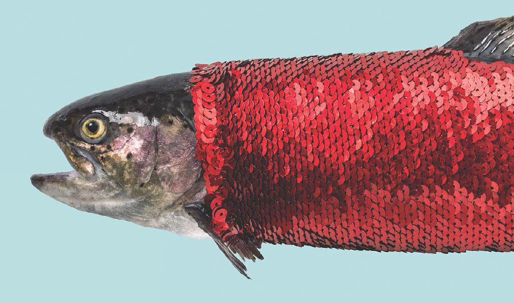 markus brenner crazy fish tender moon
